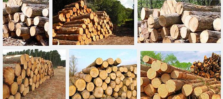 Timber Building Materials Malaysia